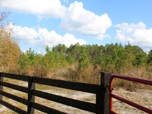 31 Acres - Lot 7 - Tall Pines S/d : Starke : Bradford County : Florida