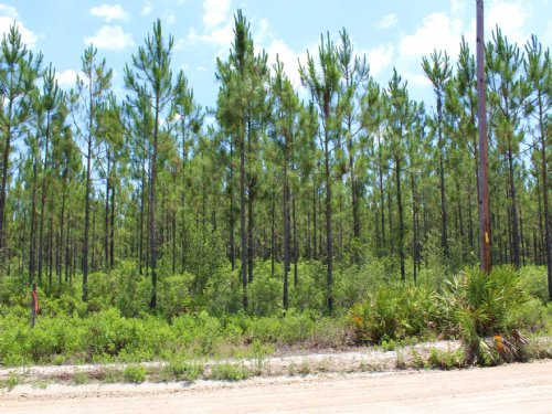 13.69 Acres - Lot 9 - Goodwin Road : Hilliard : Nassau County : Florida