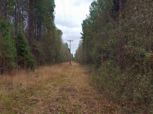 34.48 Acres : Darlington : South Carolina