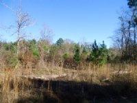 Small Hunting & Recreation Property : Oconee : Washington County : Georgia