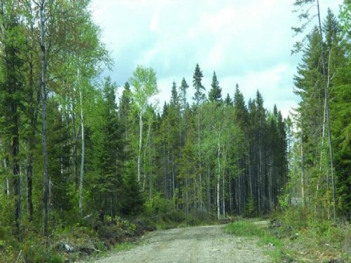 86 Acres Residential Lot For Sale : Limestone : Aroostook County : Maine