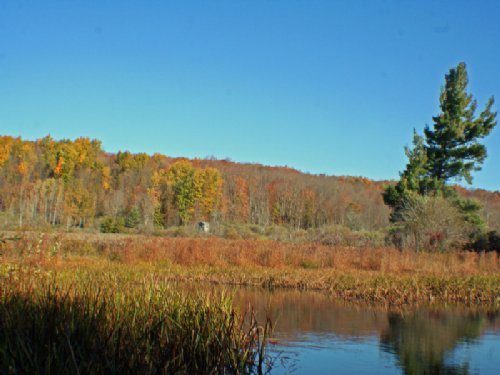 Timberland Ponds Meadows 52 Acres : Centerville : Allegany County : New York