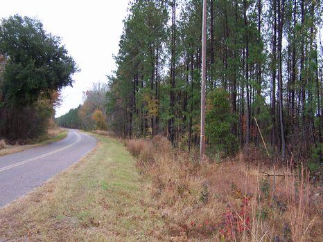 Big Goethe Tract - 488 Acres : Estill : Hampton County : South Carolina