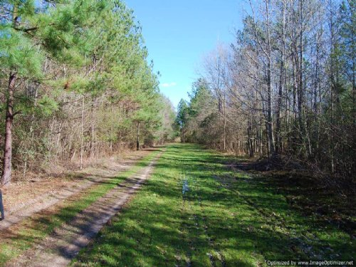 100 Ac Prime Hunting Location : Poplarville : Pearl River County : Mississippi