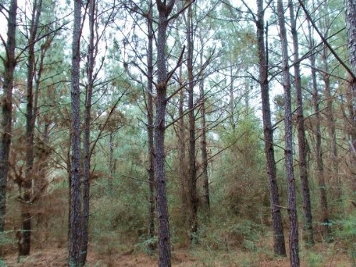 Big Thicket Perserve : Goodrich : Polk County : Texas