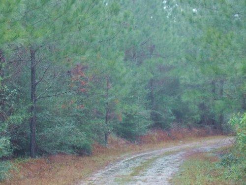 Big Cypress Creek : Woodville : Tyler County : Texas