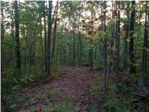 10.58+/- Acres Wooded Lot : South Pittsburg : Marion County : Tennessee