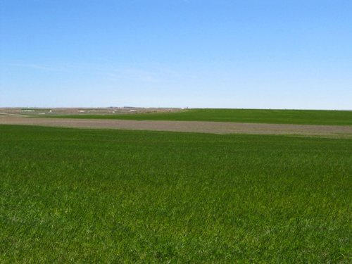 Ackerman Organic Dryland & Crp : Kimball : Nebraska