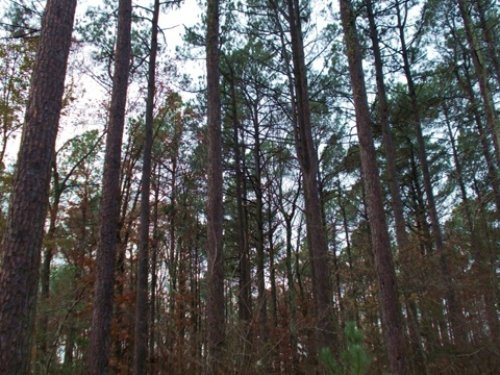 Carl Moren Rd : East End : Saline County : Arkansas