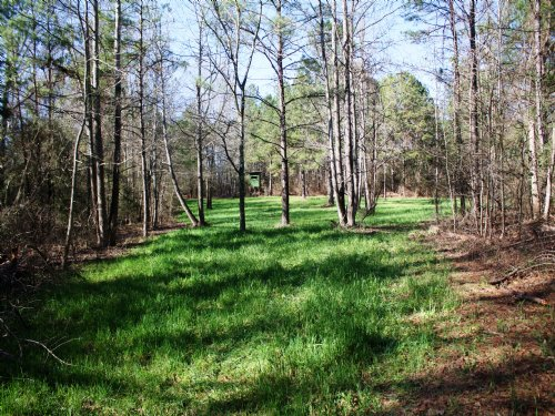 Nair Tract 48+/- Acres : Autaugaville : Autauga County : Alabama