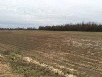34 Acre Farm On Stedman Road : Maxton : Robeson County : North Carolina