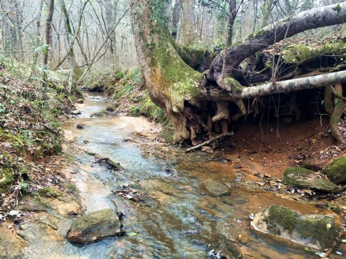 Perfect Mix Of Timber With Creek : Forsyth : Monroe County : Georgia