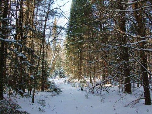 Land In The Adirondacks Woodlands : Ohio : Herkimer County : New York