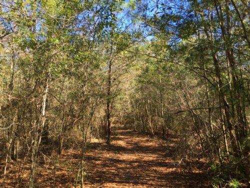 Lundy Tract : Milton : Santa Rosa County : Florida