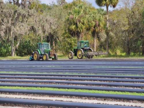 Severt Farm : Zolfo Springs : Hardee County : Florida