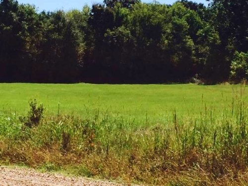 120 Ac Hunting / Timber Tract : Lexington : Holmes County : Mississippi