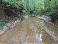 170 Acres - Hunter's Paradise : Greensboro : Greene County : Georgia