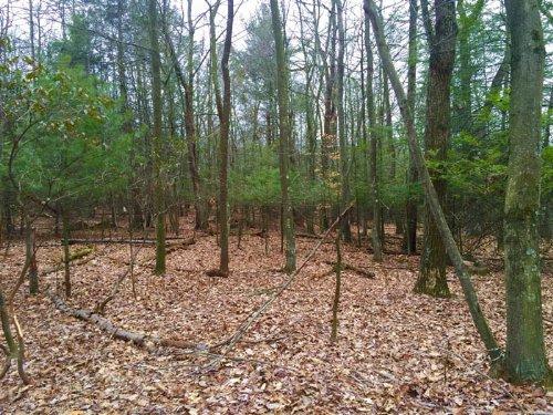10+/- Acres Of Land In Millville : Millville : Columbia County : Pennsylvania