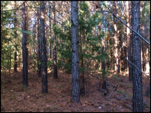 44 Acres In Choctaw County : McCool : Choctaw County : Mississippi