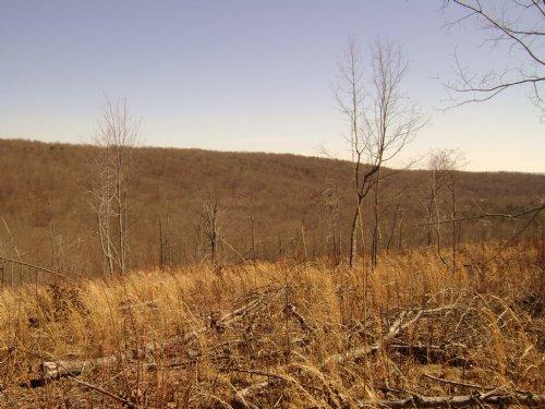 Wow, Amazing Land Versatility : Dunlap : Sequatchie County : Tennessee