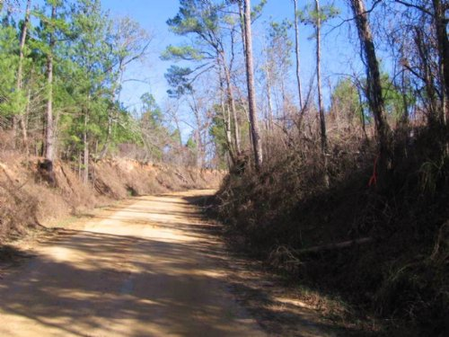 160 Ac Timber Investment Tract : Camden : Madison County : Mississippi