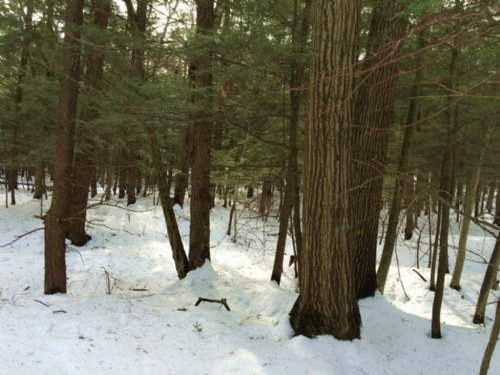 Timberland Near State Land 99 Acres : Caneadea : Allegany County : New York