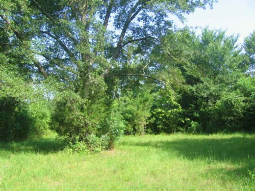 80 Timber Investment Tract : Thomastown : Leake County : Mississippi