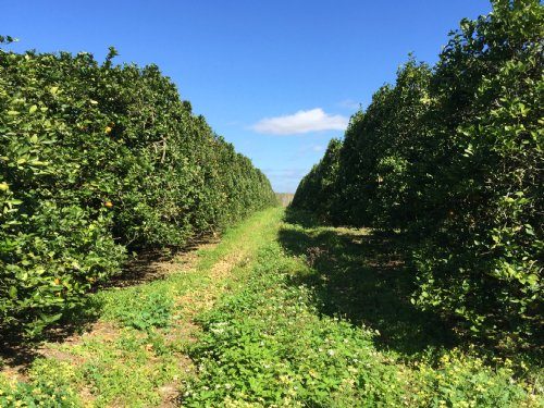 65± Ac Citrus Grove Future Homesite : Dade City : Pasco County : Florida