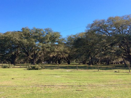 240± Ac Recreational / Hunting Land : Umatilla : Marion County : Florida
