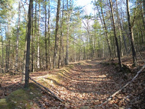 Timberland Private Hunting Land : Erwin : Steuben County : New York