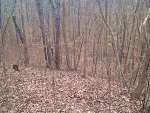 21+/- Acres Hunting Property : South Pittsburg : Marion County : Tennessee