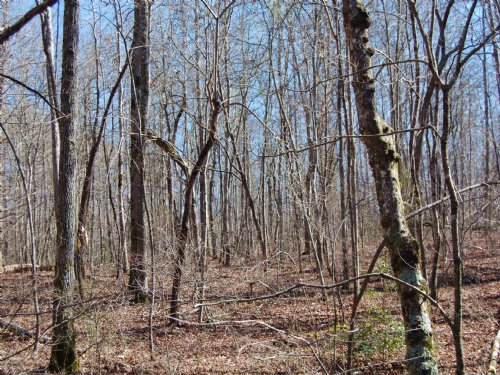 55 Acres Of Wooded Hunting Land : Altamont : Grundy County : Tennessee