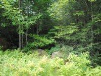 Beaumont Drive, Cedar Mountain : Cedar Mountain : Transylvania County : North Carolina