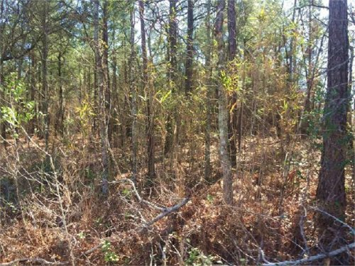 35,000 - Pee Dee Church Rd, Dilllon : Dillon : South Carolina