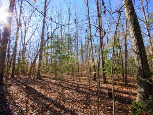 Lovely 11 Acre Lot : Bumpass : Louisa County : Virginia