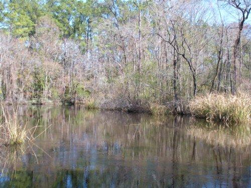Peters Creek : Georgetown : South Carolina