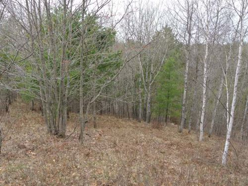 Wilderness Estates 11.38 Ac : Minocqua : Oneida County : Wisconsin