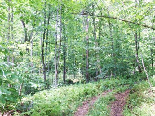 Building Lot Private Hunting Land : Edwards : St. Lawrence County : New York