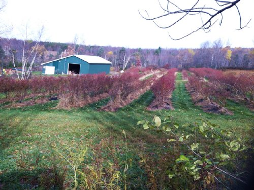 163 Acres Barn Borders State Land : Hornby : Steuben County : New York