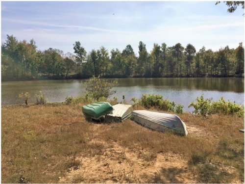 60 Acres +/- With Pond : Marmaduke : Greene County : Arkansas