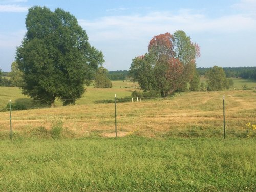 68 Acres +/- Rolling Hills : Lafe : Greene County : Arkansas