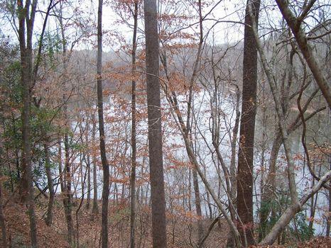 1538 Acres On Savannah River : Estill : Hampton County : South Carolina