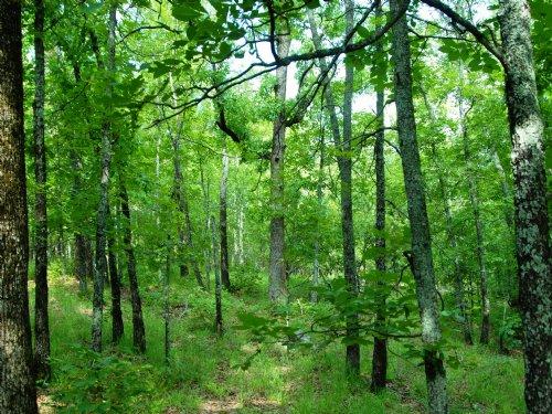 300.837 Acres Timberland : Sherwood : Pulaski County : Arkansas