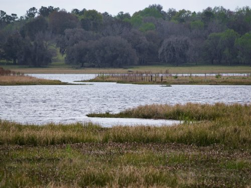 Lake Front 26 Acres : Brooksville : Hernando County : Florida