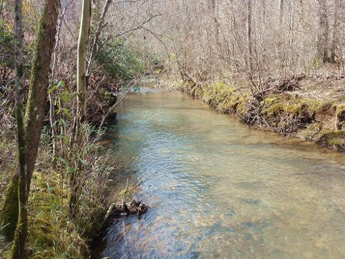 240+/- Acres Of Timberland : Heflin : Randolph County : Alabama