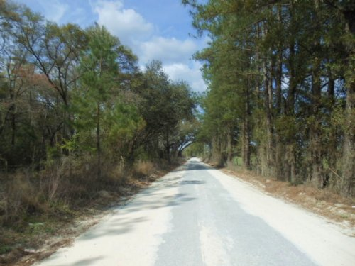 23 Acres Close To Town : Lake City : Columbia County : Florida