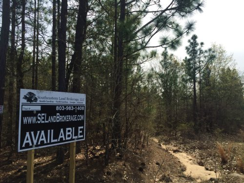 38.9 Acres Pine Plain Road : Gaston : Calhoun County : South Carolina