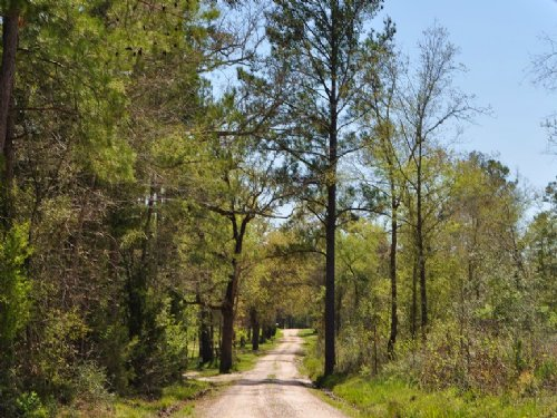 24.5 Acres Jordy Rd. : Huntsville : Walker County : Texas
