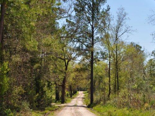 10.5 Acres Jordy Rd. : Huntsville : Walker County : Texas