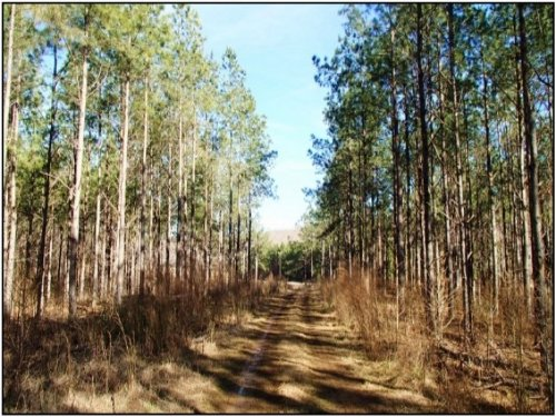 274 Acres In Montgomery County : Duck Hill : Montgomery County : Mississippi